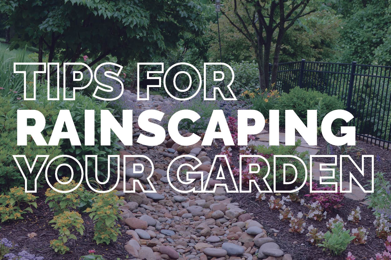 Rainscaping Tips
